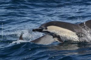 Point-Lobos_nature_24