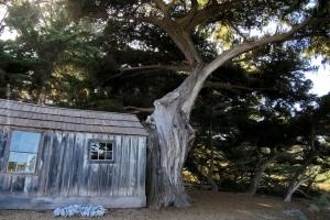 Point-Lobos_nature_26