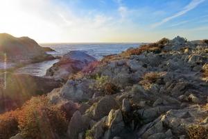 Point-Lobos_nature_30