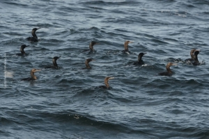 Point-Lobos_nature_33