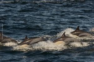 Point-Lobos_nature_34