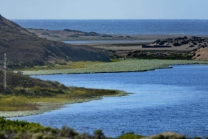 Point-Reyes_nature_14