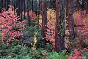 Yosemite_61