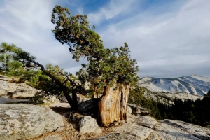 Yosemite_69
