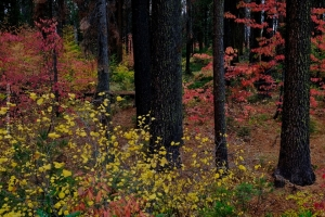 Yosemite_78