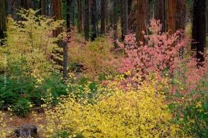 Yosemite_79