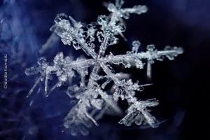Snowflakes_05