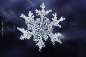 Snowflakes_06_1