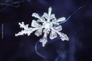 Snowflakes_07