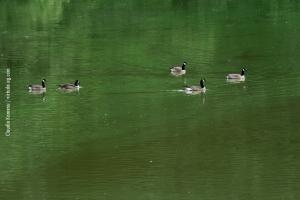 Central-Park_july-nature_33