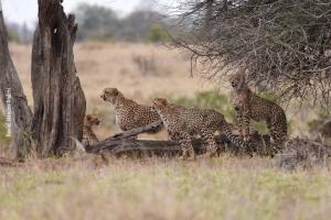 Africa_2017_Daniel_07