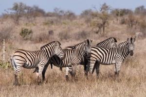 Africa_2017_Daniel_24