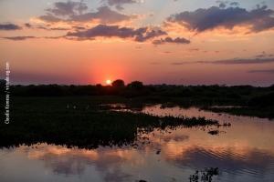 Pantanal_201708_13
