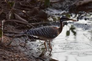 Pantanal_201708_17