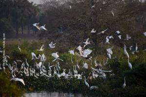 Pantanal_201708_18