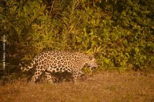 Pantanal_201708_29