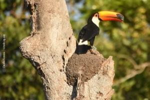 Pantanal_201708_30