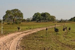 Pantanal_201708_33
