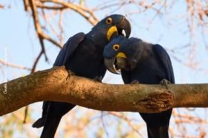 Pantanal_201708_35