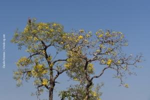 Pantanal_201708_36