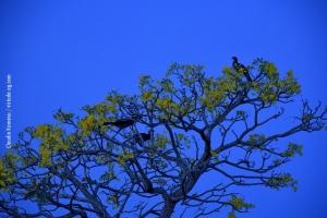 Pantanal_201708_39