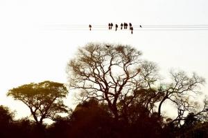 Pantanal_201708_45