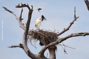 Pantanal_201708_46