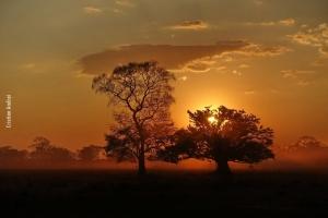 Pantanal_Cristian-Andrei_ago17_04