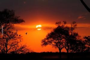 Pantanal_Cristian-Andrei_ago17_05