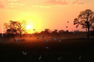 Pantanal_Cristian-Andrei_ago17_06