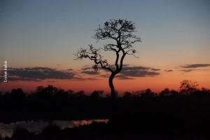 Pantanal_Cristian-Andrei_ago17_07