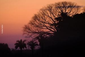 Pantanal_Cristian-Andrei_ago17_09