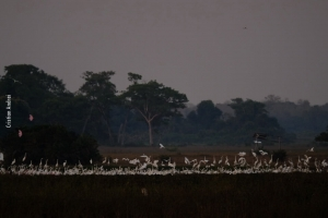 Pantanal_Cristian-Andrei_ago17_11