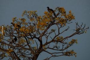 Pantanal_Cristian-Andrei_ago17_21