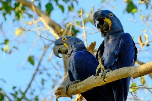 Pantanal_Cristian-Andrei_ago17_22