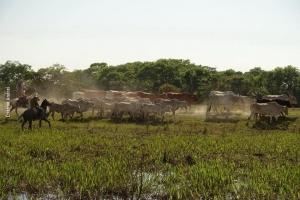 Pantanal_Cristian-Andrei_ago17_25