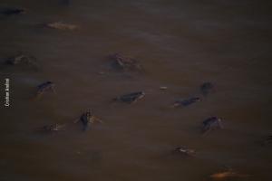 Pantanal_Cristian-Andrei_ago17_32