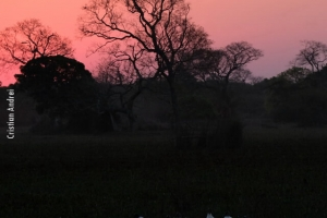 Pantanal_Cristian-Andrei_ago17_36