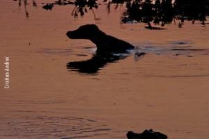 Pantanal_Cristian-Andrei_ago17_37