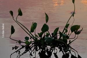 Pantanal_Cristian-Andrei_ago17_39