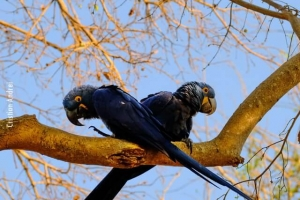 Pantanal_Cristian-Andrei_ago17_41