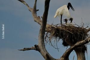 Pantanal_Cristian-Andrei_ago17_42