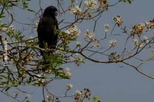 Pantanal_Cristian-Andrei_ago17_43