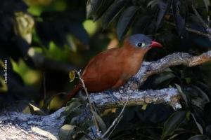 Amazonia_birding_nov2017_02