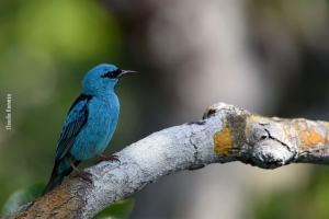Amazonia_birding_nov2017_06