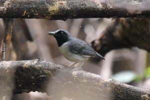 Amazonia_birding_nov2017_19