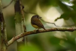Amazonia_birding_nov2017_26