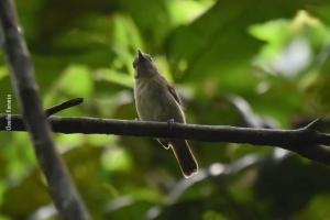Amazonia_birding_nov2017_28
