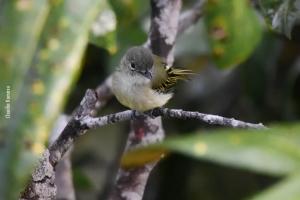 Amazonia_birding_nov2017_30