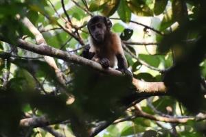 Amazonia_birding_nov2017_43